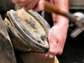 nailing-shoe-on